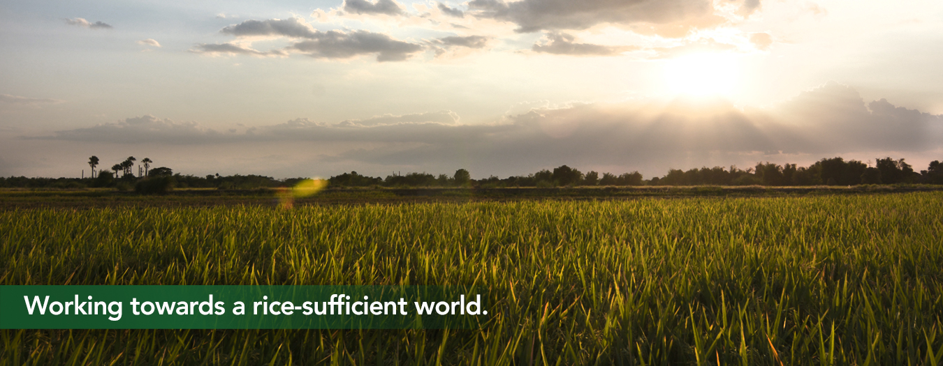 Working towards a rice-sufficient world